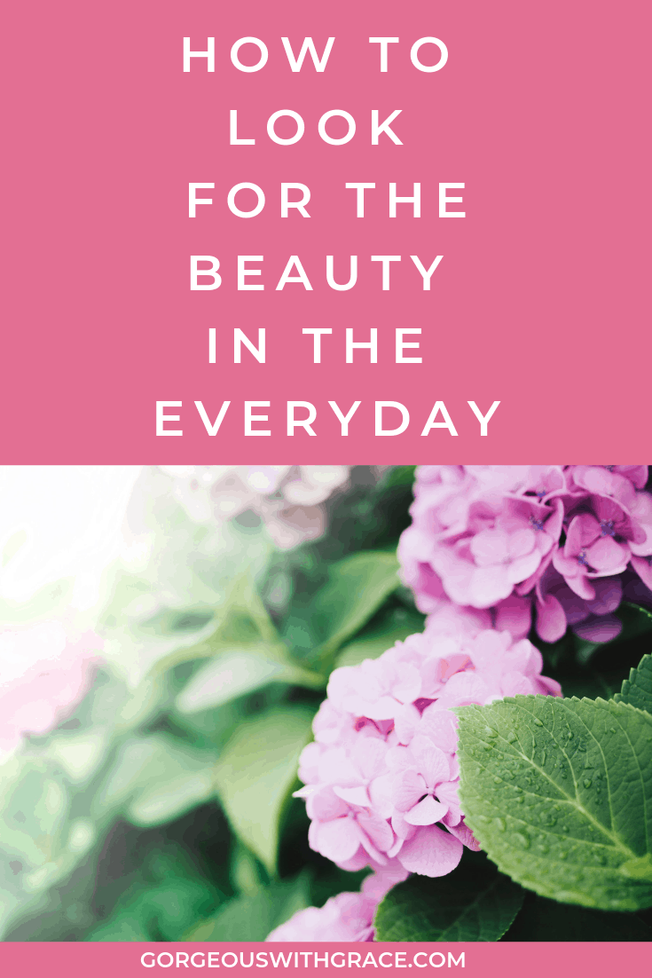 Look For The Beauty In The EveryDay